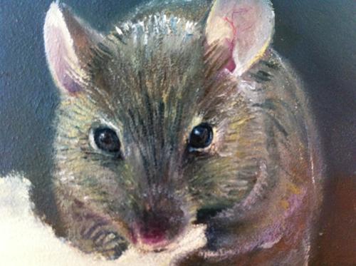 muizen kop
